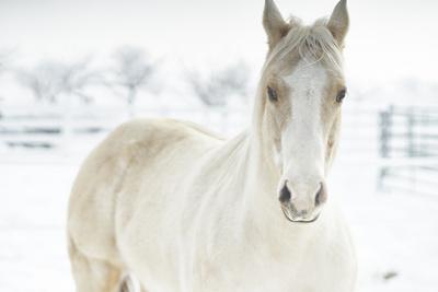 Horse Mendon White