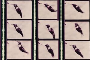 Hummingbird in Motion by Chris Dunker