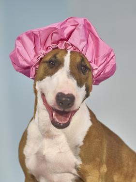Spa Dog Hat by Chris Dunker