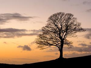 Bare Winter Tree at Sunset, the Roaches, Staffordshire, Peak District National Park, England, Unite by Chris Hepburn