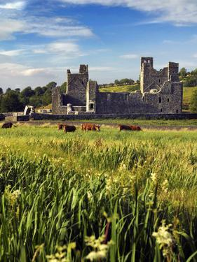 Cattle Amongst the Ruins of Fore Abbey in County Westmeath, Ireland by Chris Hill