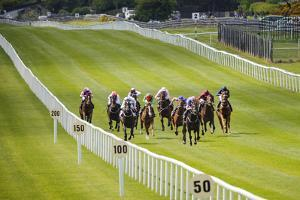 Horse Racing at the Curragh in Ireland by Chris Hill