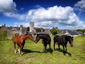 Horses Outside Fethard in County Tipperary by Chris Hill
