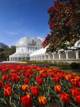 Palm House in Belfast's Botanic Gardens by Chris Hill
