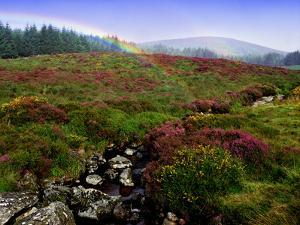 Rainbow and Heather in County Wicklow, Ireland by Chris Hill