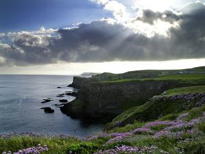 Sunlight Streams Through Clouds onto Sea Pinks at Dunluce Castle on Northern Ireland's North Coast by Chris Hill