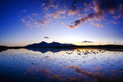Swans Float on Dundrum Bay in Mournes, County Down, Ireland by Chris Hill