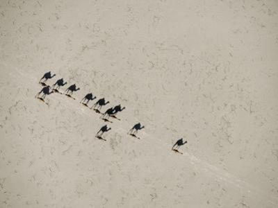 A scorching sun casts long shadows as camels cross salt flats by Chris Johns