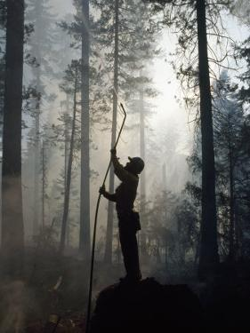 Firefighter Spraying Water Up into Trees in a Forest Fire by Chris Johns
