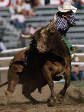 Rodeo Competitor in a Steer Riding Event by Chris Johns