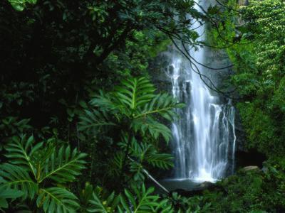 Wailua Falls Cascades into a Forest Glen