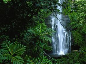 Wailua Falls Cascades into a Forest Glen by Chris Johns