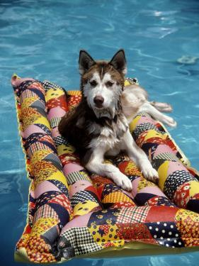 Dog Floating on Raft in Swimming Pool by Chris Minerva