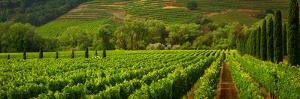 Wine Country 3 by Chris Moore - Exploring Light Photography