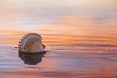 Shellflection