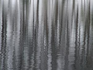 USA, New York State. Abstract reflection of winter trees. by Chris Murray