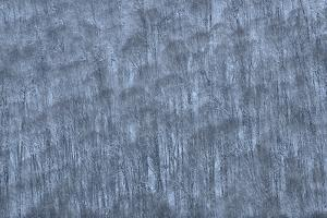 USA, New York State. Hillside of winter trees. by Chris Murray