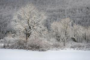 USA, New York State. Morning sunlight on snow covered trees by Chris Murray