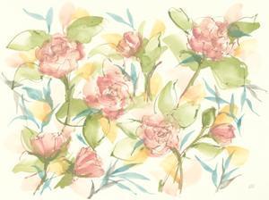 Blush Camellias by Chris Paschke