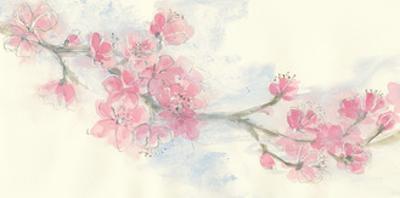 Cherry Blossom II by Chris Paschke