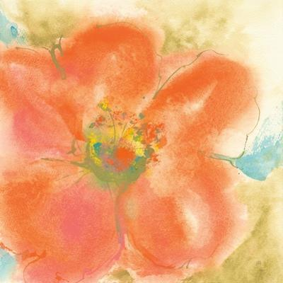 Coral Poppy II by Chris Paschke