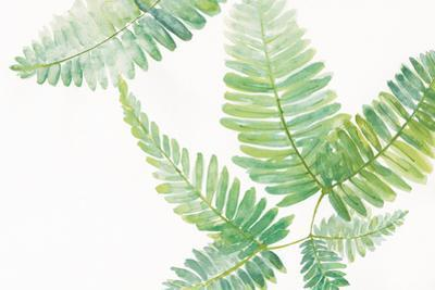 Ferns I Square by Chris Paschke