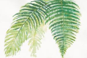Ferns III Square by Chris Paschke