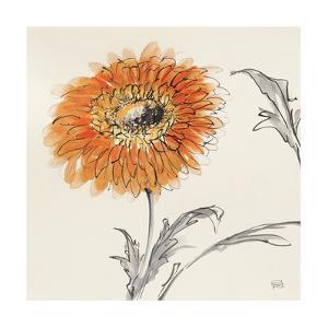 Orange Gerbera III by Chris Paschke