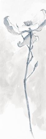 Solitary Dogwood IV Gray by Chris Paschke
