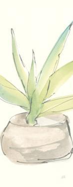 Succulent III Crop by Chris Paschke