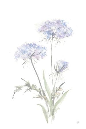 Tall Queen Annes Lace I