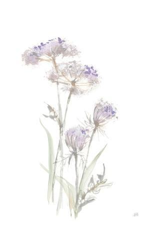 Tall Queen Annes Lace II