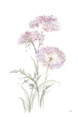 Tall Queen Annes Lace III by Chris Paschke