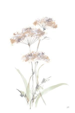 Tall Queen Annes Lace IV