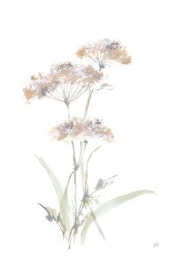Tall Queen Annes Lace IV by Chris Paschke