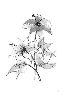 Wash Clematis by Chris Paschke