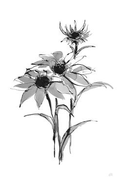 Wash Echinacea I by Chris Paschke