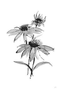 Wash Echinacea II by Chris Paschke