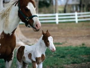 One Day Old Horse with Mother by Chris Rogers