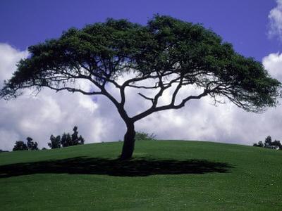 Shade Tree on Grassy Hill