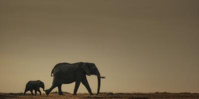 African elephant and her calf on horizon at sunset, Loxodonta africana. by Chris Schmid