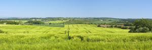 Denmark, Funen, Wheat Fields, Near Horne by Chris Seba