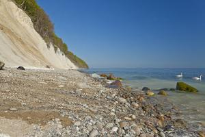 Europe, Germany, Mecklenburg-Western Pomerania, Baltic Sea Island RŸgen, Chalk Cliffs, Swans by Chris Seba