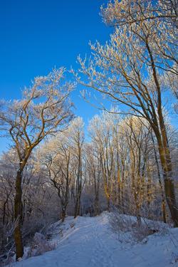 Europe, Germany, Weser Hills, Porta Westfalica, Winter Landscape, Forest Path by Chris Seba