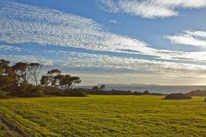 Europe, Spain, Majorca, Cap De Ses Salines, Green Meadows by Chris Seba
