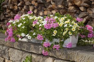 Flower Box by Chris Seba