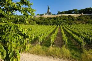 Germany, Hessen, Middle Rhine Valley, RŸdesheim, Vineyard, Niederwalddenkmal, Morning Light by Chris Seba