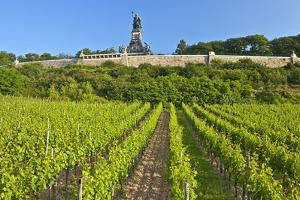 Germany, Hessen, Middle Rhine Valley, R?desheim, Vineyard, Niederwalddenkmal, Morning Light by Chris Seba