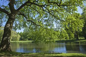 Germany, Lower Saxony, Hannover, Georgengarten, Pond, Tree, Morning Light by Chris Seba