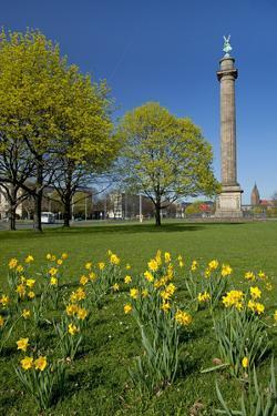 Germany, Lower Saxony, Hannover, Waterloo Column, Meadow, Daffodils by Chris Seba